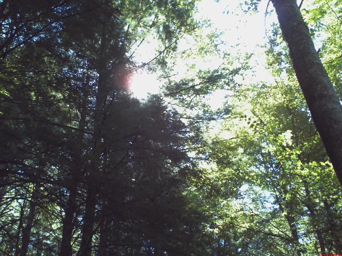 Blanton Forest, October 2008