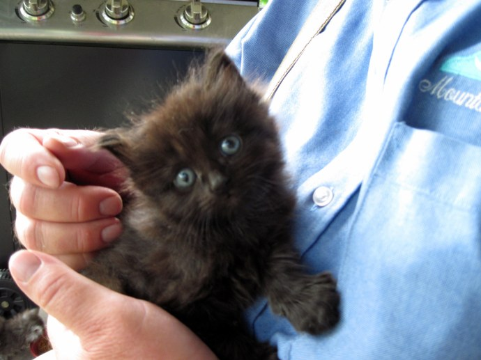 One of our kittens, little Bear, held by my Dad. Taken 5/21/10, Canon PowerShot A 1100 IS.