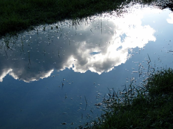 Reflection on Standing Water, Pic 2. 8/19/2010. Canon PowerShot A 1100 IS.