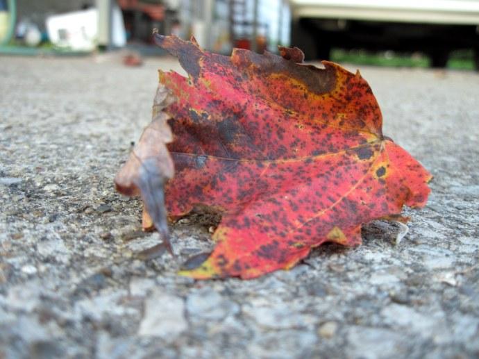 A leaf, shed. Taken 9/22/2010.