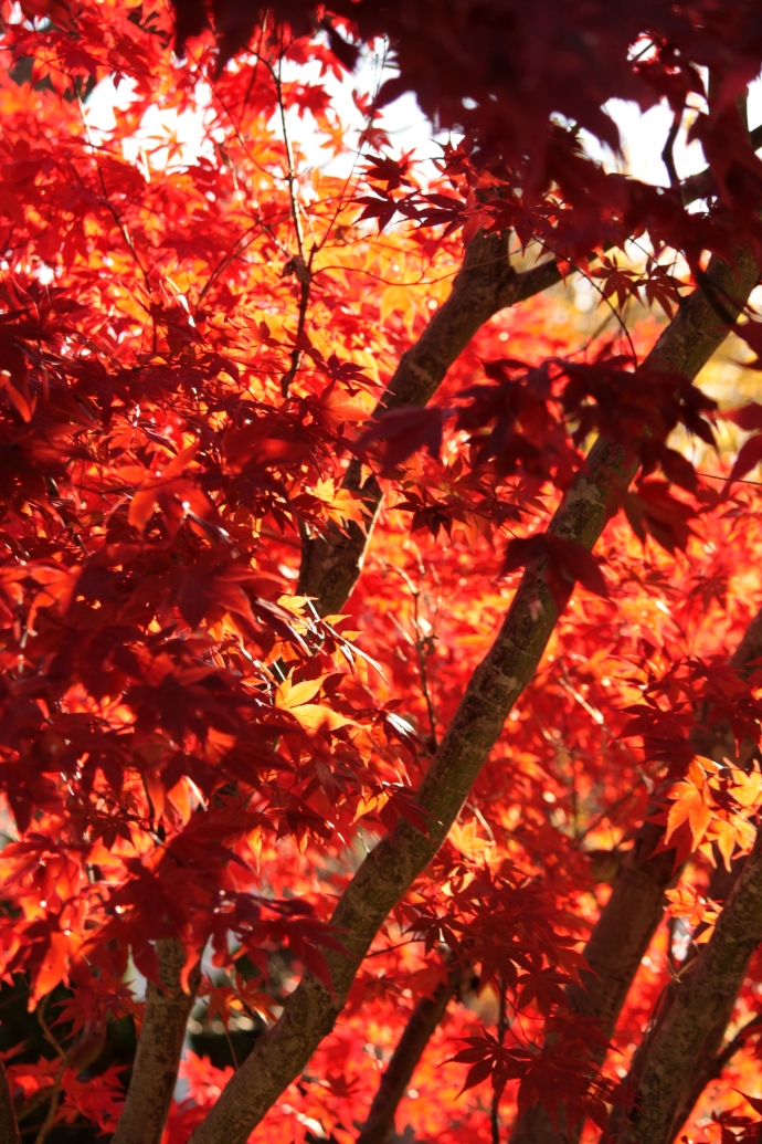 Autumn Leaves and Light: Red and Orange